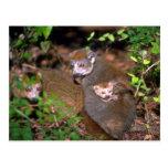 Crowned Lemur pair with infant Postcards