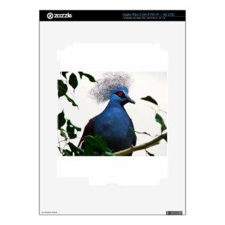 Crowned Pigeon iPad 3 Skin