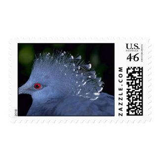Crowned pigeon stamp