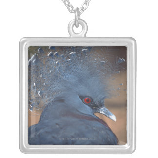 crowned pigeon silver plated necklace