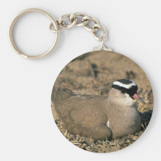 Crowned Plover Key Chains
