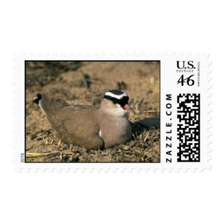 Crowned Plover Postage Stamps