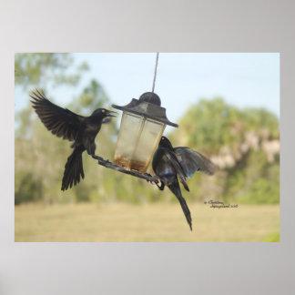 Crows birds flying bird feeder Print