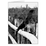 Crows Card