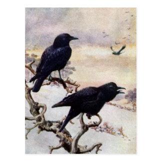 Crows in Winter Vintage Illustration Postcard