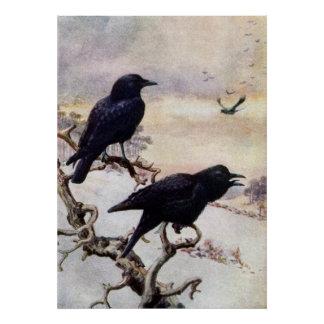 Crows in Winter Vintage Illustration Print