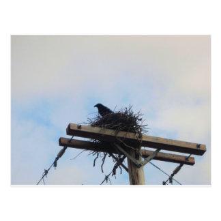Crows Nest in Ak Postcard