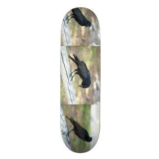 Crows or Grackles Skateboard