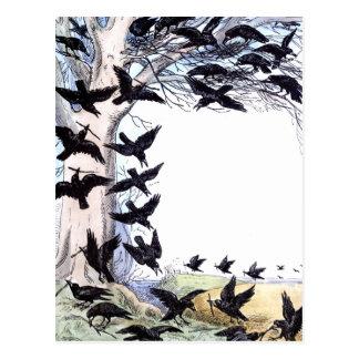 Crows Postcard