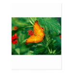 crucero Malasia de las mariposas Postal