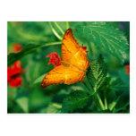 crucero Malasia de las mariposas Postales