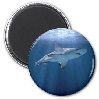 Cruising Shark 2 Inch Round Magnet