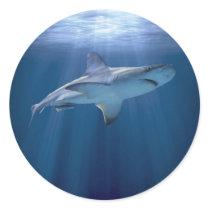 Cruising Shark Classic Round Sticker