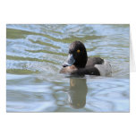 Cruising Tufted Duck Greeting Card