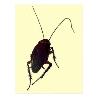Crunchy Cockroach Postcard