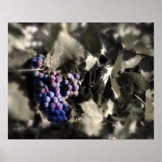 Crush at Tefft Cellars main vineyard Print