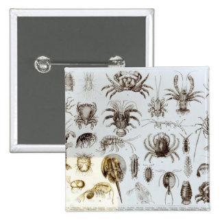 Crustacea and Arachnida Pinback Buttons