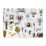 Crustacea and Arachnida Gallery Wrapped Canvas