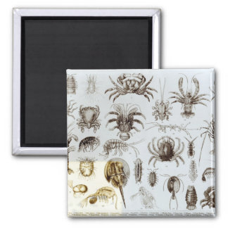 Crustacea and Arachnida Magnet