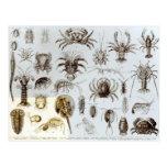 Crustacea and Arachnida Post Cards