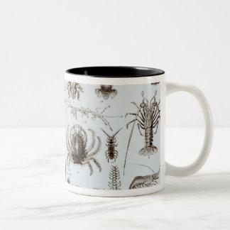Crustacea and Arachnida Two-Tone Coffee Mug