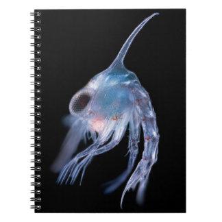 Crustáceo planctónico cuaderno