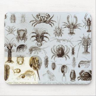 Crustáceos y arácnidos alfombrillas de raton