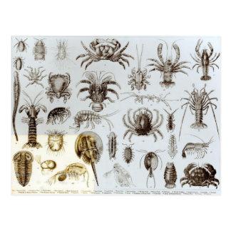 Crustáceos y arácnidos postal