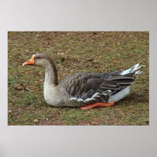 Cruz del ganso del cisne del ganso silvestre