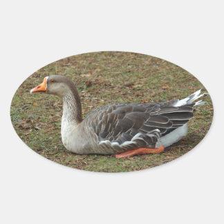 Cruz del ganso del cisne del ganso silvestre pegatina ovalada