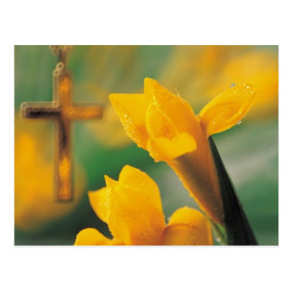 Cruz y narcisos tarjeta postal