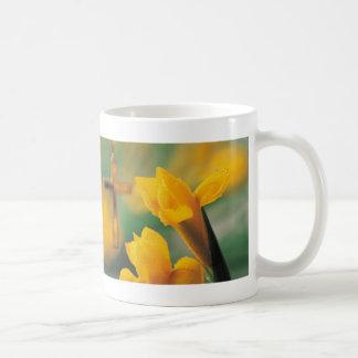 Cruz y narcisos taza de café