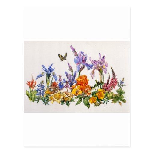 Cruzado del iris tarjeta postal
