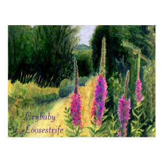 Crybaby Loosestrife Postcard