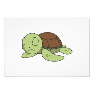 Crying Cute Baby Turtle Tortoise Greeting Card Art Photo