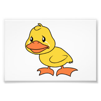 Crying Yellow Duckling Lame Duck Day Photographic Print