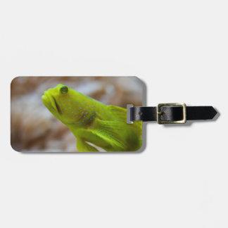 Cryptocentrus cinctus bag tag