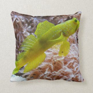 Cryptocentrus cinctus pillow