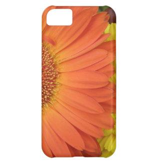 Crysanthemum anaranjado y amarillo