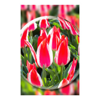 Crystal ball with red-white tulips in field stationery