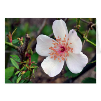 Crystal Fairy Rose Flower Card