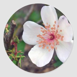 Crystal Fairy Rose Flower Classic Round Sticker