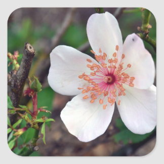 Crystal Fairy Rose Flower Square Sticker