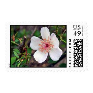 Crystal Fairy Rose Postage