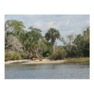 Crystal River Florida Postcard