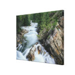 Crystal River, Gunnison National Forest, Stretched Canvas Prints