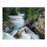 Crystal River, Gunnison National Forest, Post Card