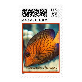 Ctenochaetus hawaiiensis Postage