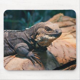 Ctenosaura melanosterna mouse pad
