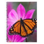 Cuaderno 2 de la mariposa de monarca
